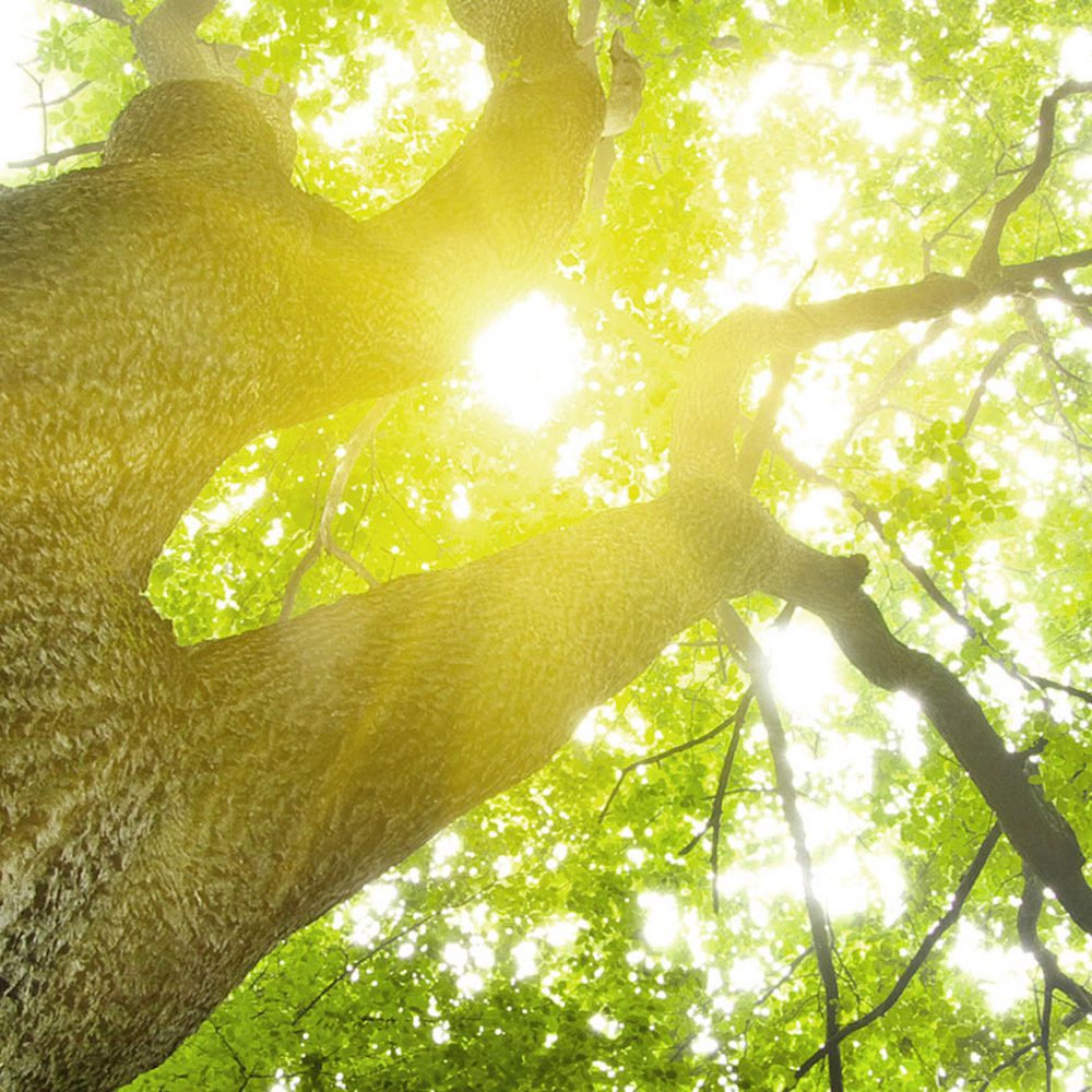 reditum und die Nachhaltigkeit